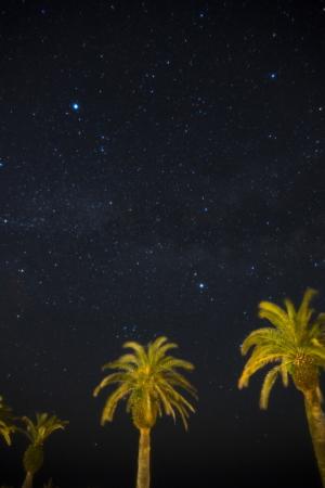 フェニクスと星空