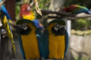 ガーデン内の鳥