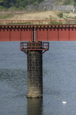鉄橋と白鳥
