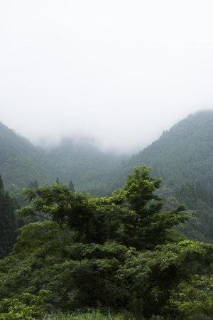 山霧を背景に