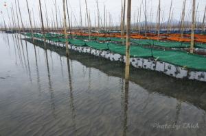 水鏡の海苔網